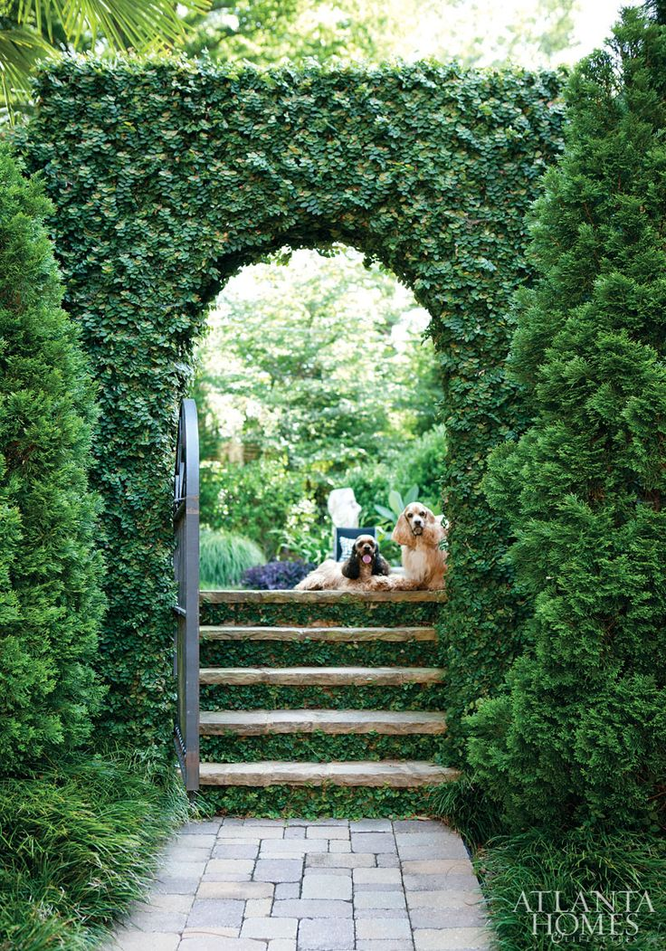 dogs and garden design